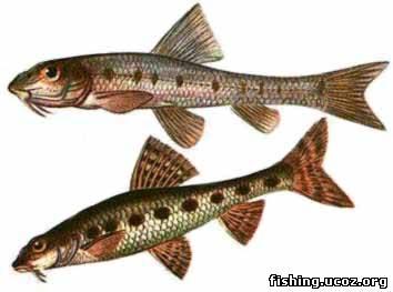 пресноводные рыбы.